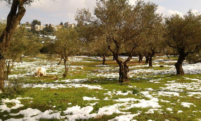שלג בעמק המצלבה